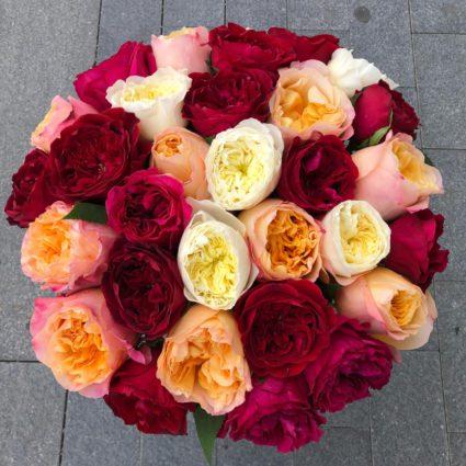 31 садовая роза David Austin